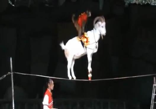Чудеса Китайского Цирка!