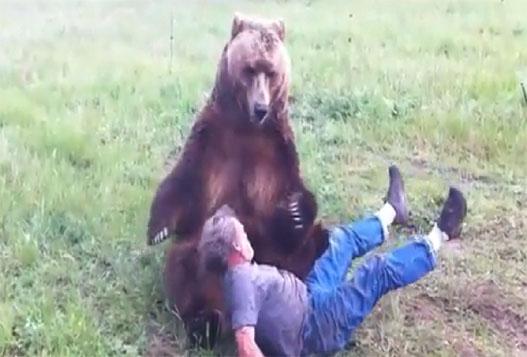 Человек Играет С Огромным Медведем
