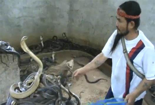 Отбор Змей Для Змеиного Шоу В Таиланде